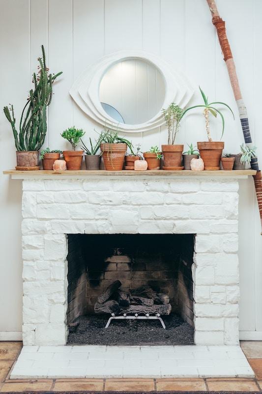 Die besten Zimmerpflanzen für wenig Licht. Ein Beitrag von Helmut Freitag und der GREAT AG
